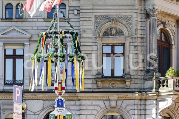 Maibaum aufgestellt in Rheinberg vor Fassade Underbergstammhaus