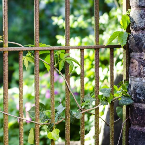 Blick in einen Naturgarten durch Metallzaun