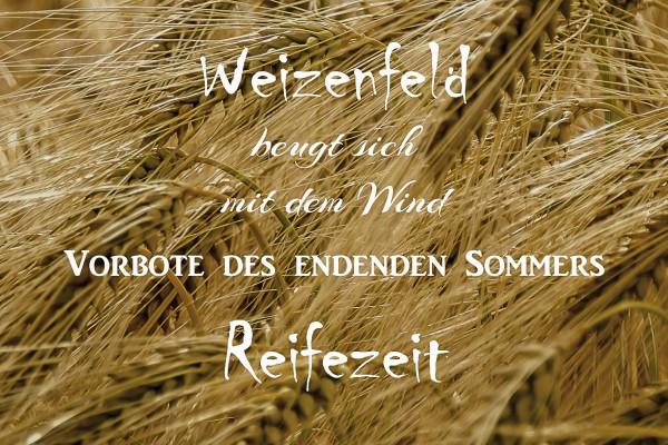 Elfchen Weizenfeld kompakt