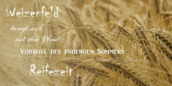 Elfchen Weizenfeld