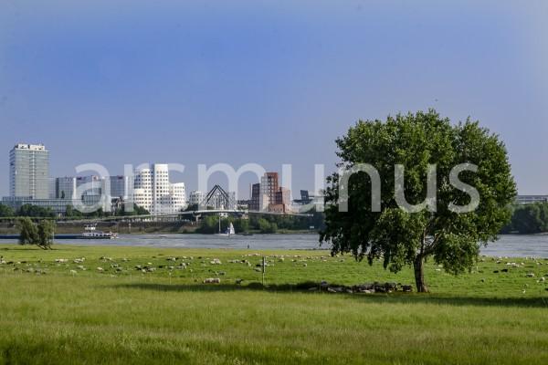 Blick über die Rheinwiesen zum Medienhafen Düsseldorf