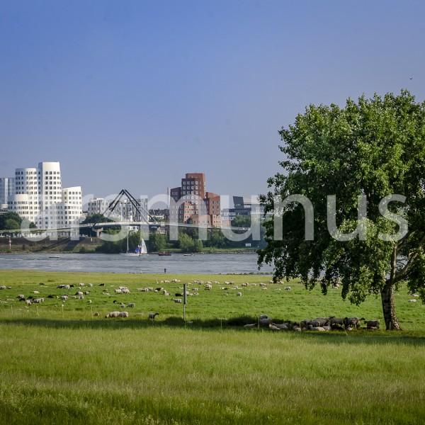 Blick über Rhein und Rheinwiesen zum Medienhafen
