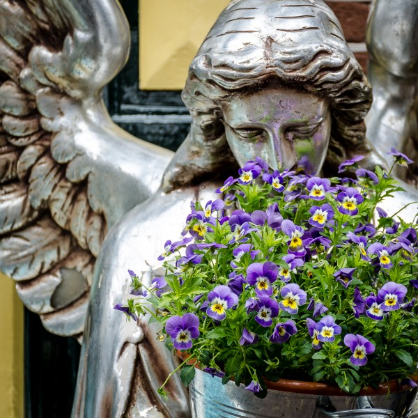 Engel mit Hornveilchen